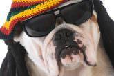 Ai cani piace il reggae